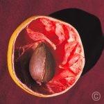 Pamplemousse - Nature vivante © Prosper Jerominus 2013