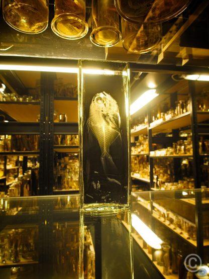 The Museum für Naturkunde - Leibniz Institute for Evolution and Biodiversity Science August Tiede architect, 1883–1889